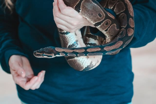DREAMING ABOUT SNAKES: Meaning And Symbolism - Lucid Dream Society